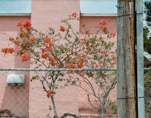 Sin título Sondeos de un paisaje cultivado 2 instalación de fotografías a color | Rialta