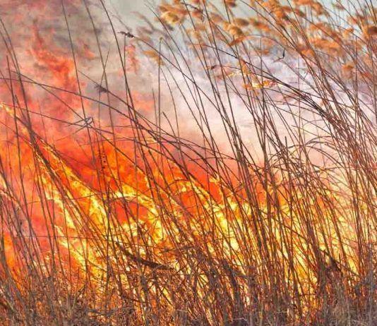 Campo quemado FOTO Daniel Chetroni | Rialta