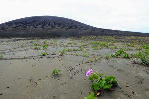 Vegetación en Hunga Tonga FOTO Dan Slayback | Rialta